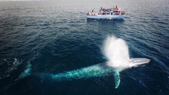 Balboa Island Newport Beach Whale Watching Special