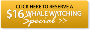 16 whale watching special