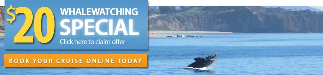 20 dollar whale watching super deal special promo code discount