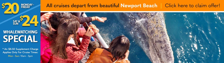 Newport Beach Whale Watching Newport Landing Davey's Locker Special Offer Discount Code Reduced Sale Pricing