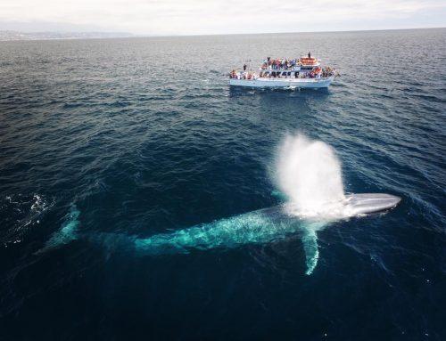$20 Whale & Dolphin Cruises – Balboa Island Special